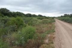 Limpieza de la zona de camino, en margen izquierda del canal San Martin 1